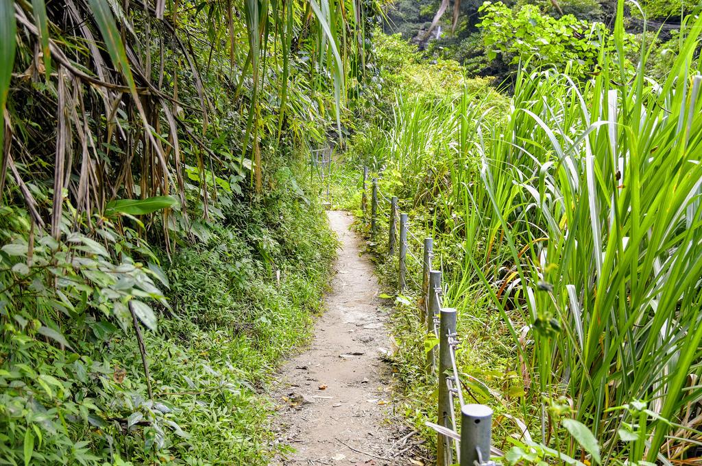 竹坑溪步道_DSC8535.jpg