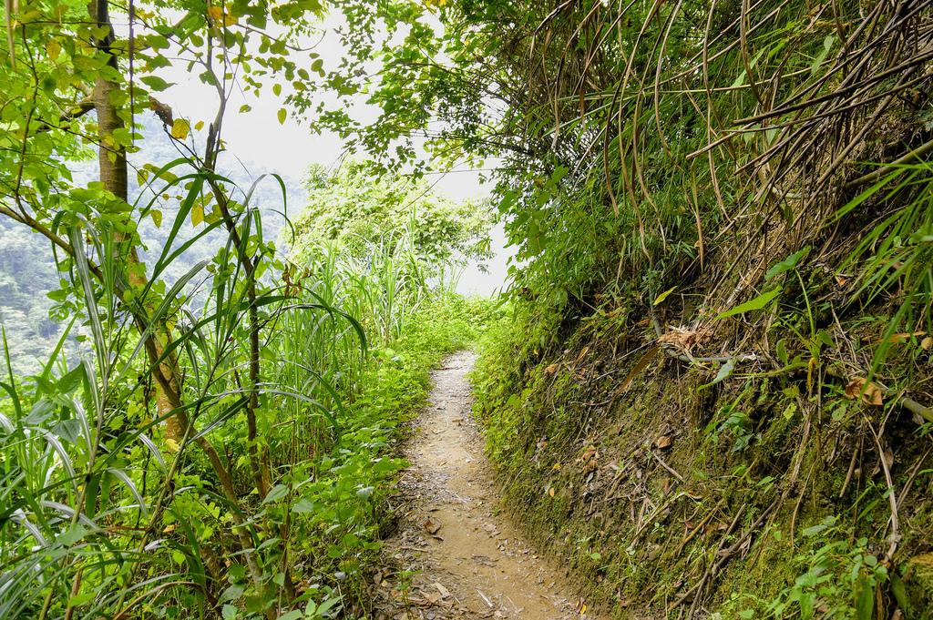 竹坑溪步道_DSC8633.jpg