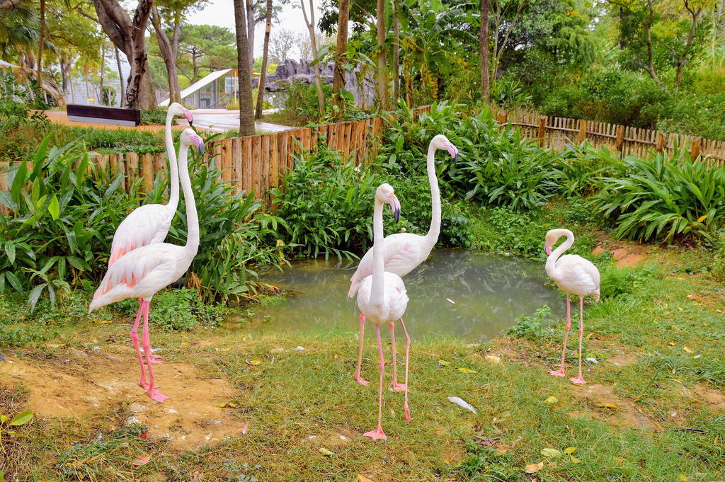 新竹市立動物園9394.jpg