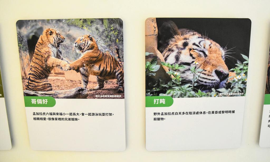 新竹市立動物園9437.jpg
