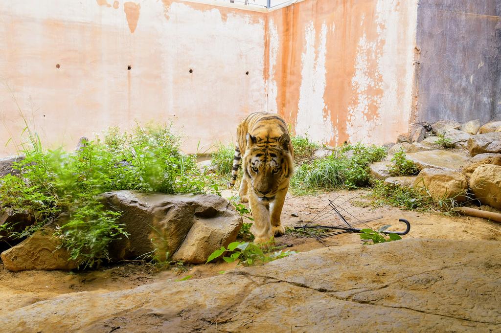 新竹市立動物園9450.jpg