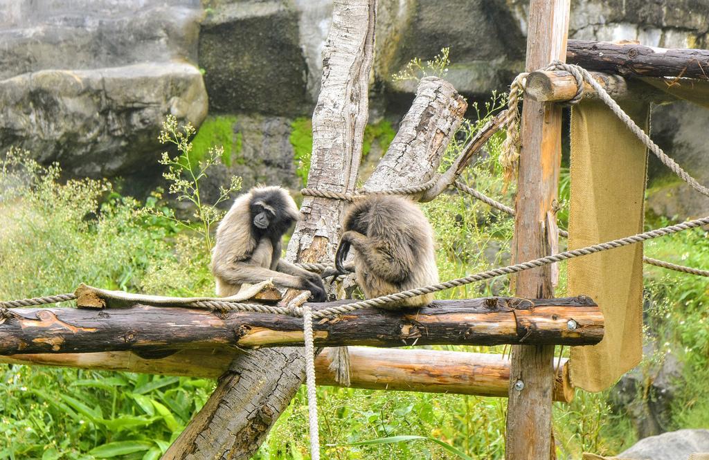 新竹市立動物園9561.jpg