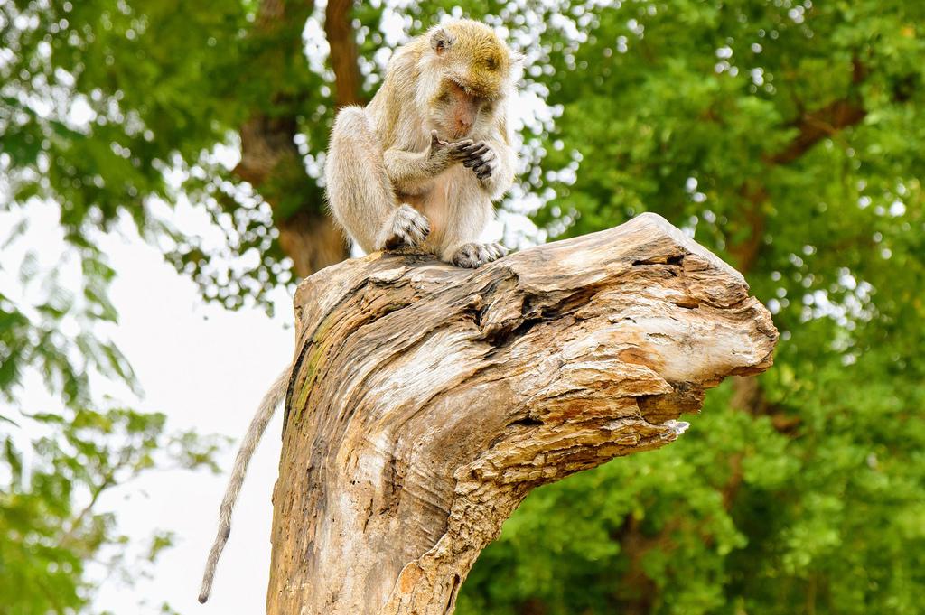 新竹市立動物園9600.jpg