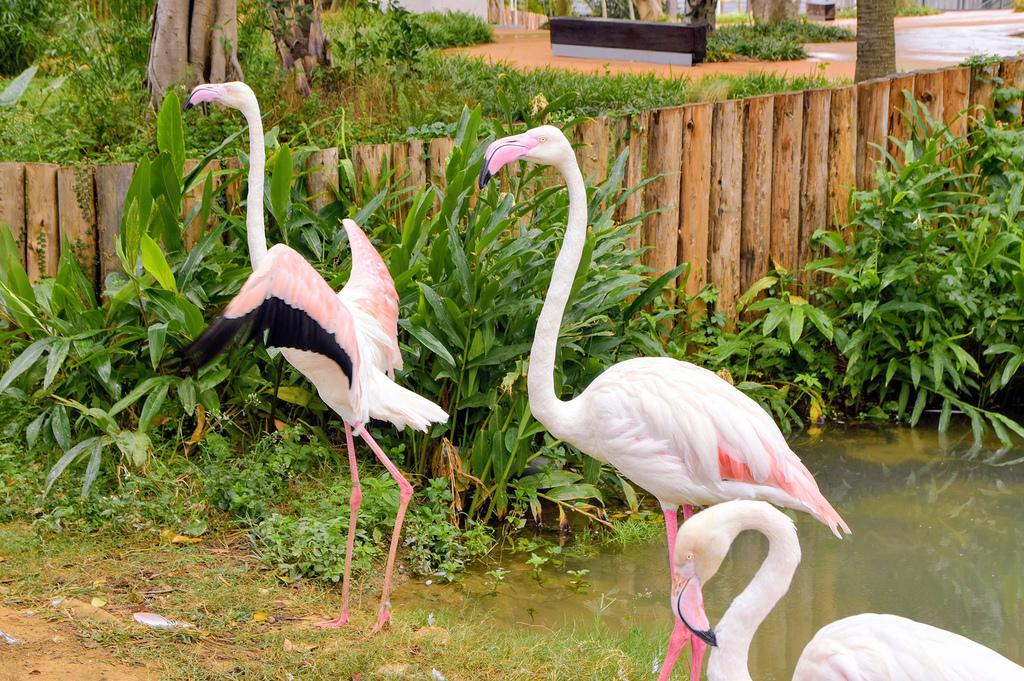 新竹市立動物園403.jpg