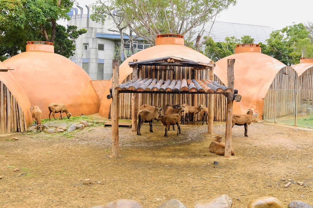 新竹市立動物園517.jpg