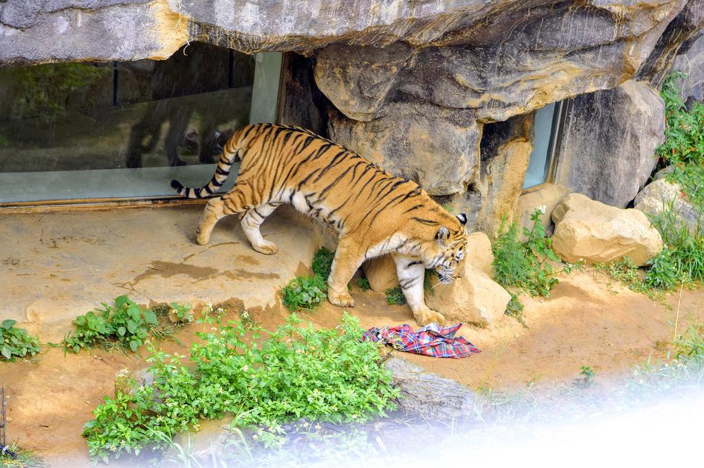 新竹市立動物園484.jpg