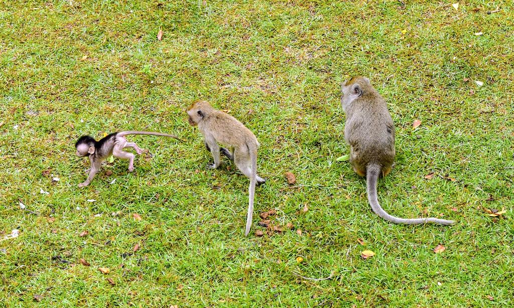 新竹市立動物園613.jpg