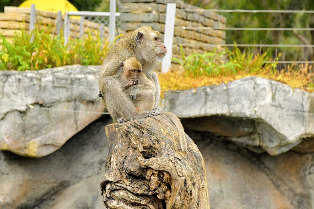 新竹市立動物園638.jpg