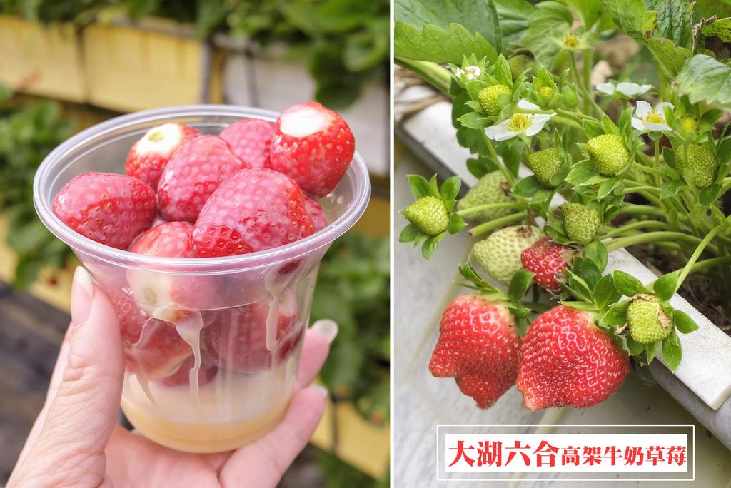 大湖六合高架牛奶草莓1.jpg