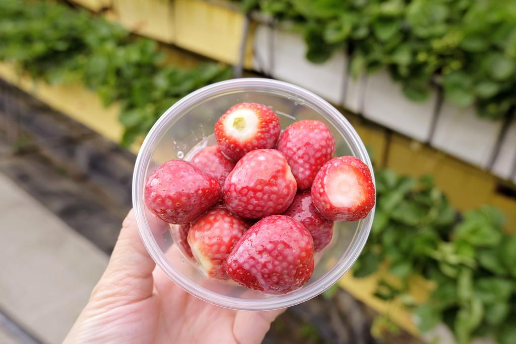 六合高架牛奶草莓_9948.jpg