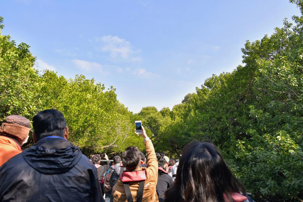 四草綠色隧道_DSC3340.jpg