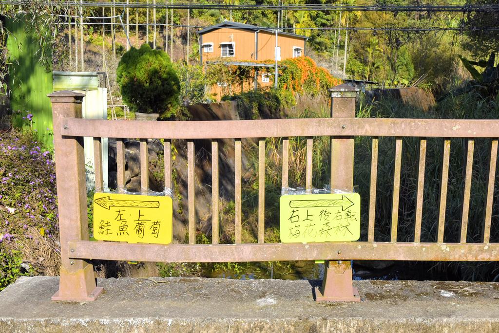 梅花森林_DSC4775.jpg