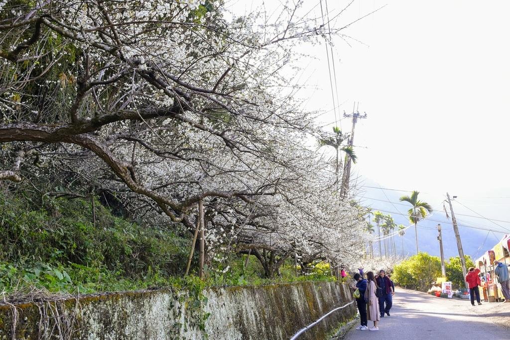 梅花森林_DSC4805.jpg