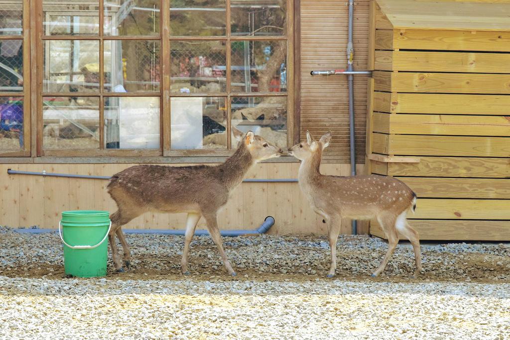 古坑鹿營農場_DSC6392.jpg