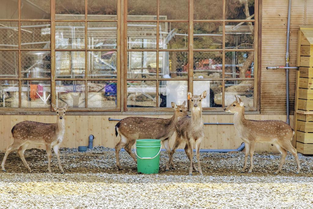 古坑鹿營農場_DSC6398.jpg
