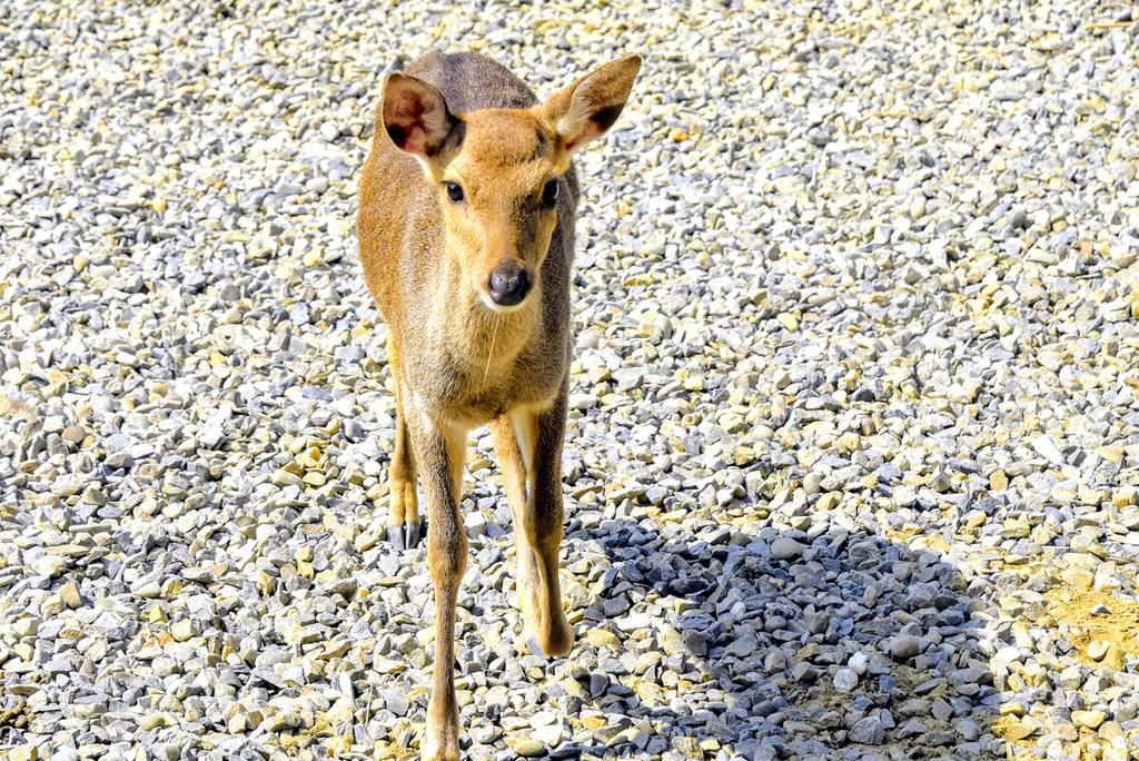 古坑鹿營農場_DSC6428.jpg