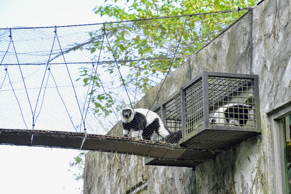 臺北市立動物園_DSC4319.jpg