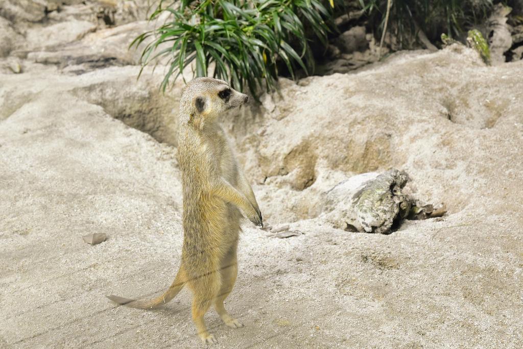 臺北市立動物園_DSC4335.jpg