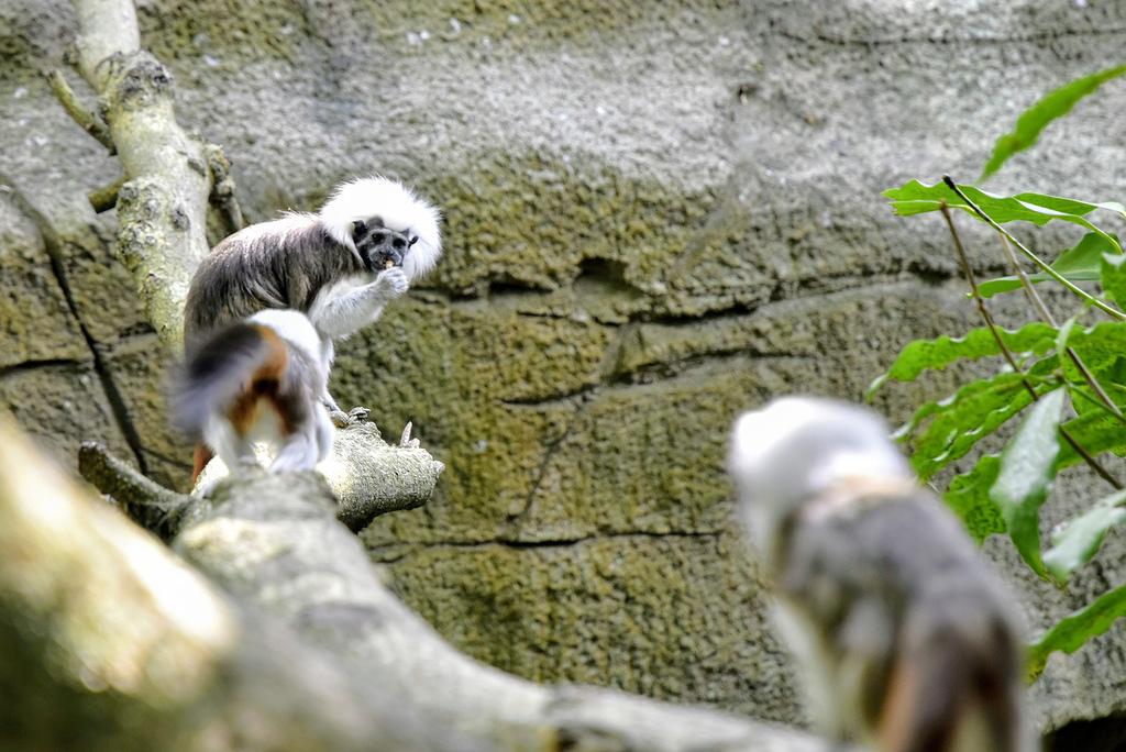 臺北市立動物園_DSC4355.jpg