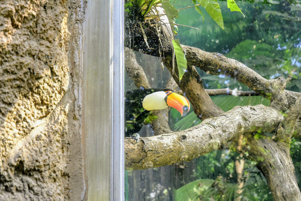 臺北市立動物園_DSC4362.jpg