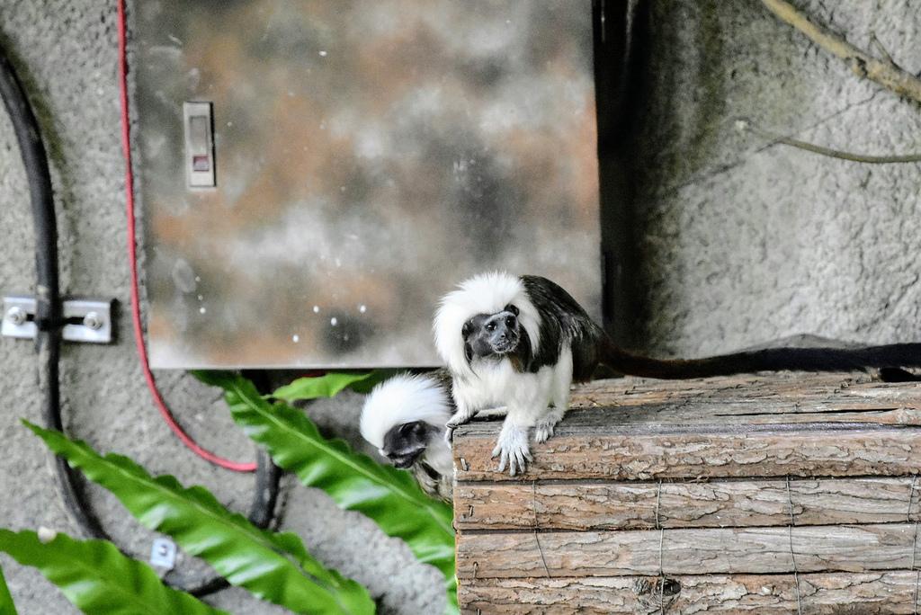 臺北市立動物園_DSC4367.jpg