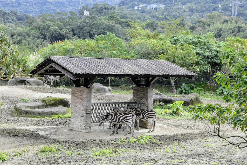 臺北市立動物園_DSC4424.jpg