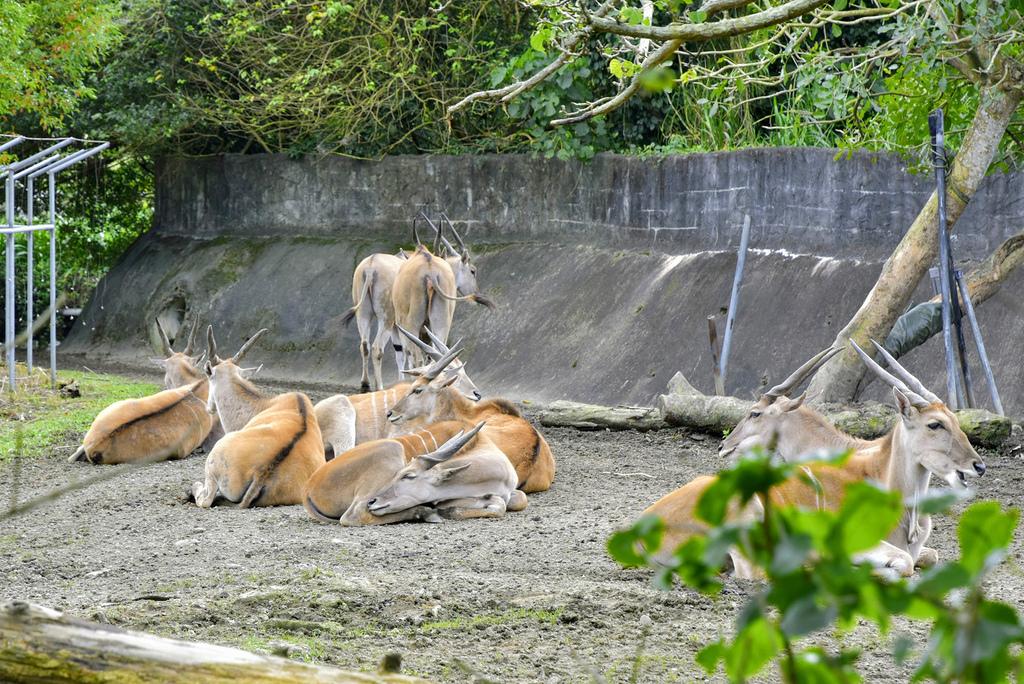 臺北市立動物園_DSC4439.jpg
