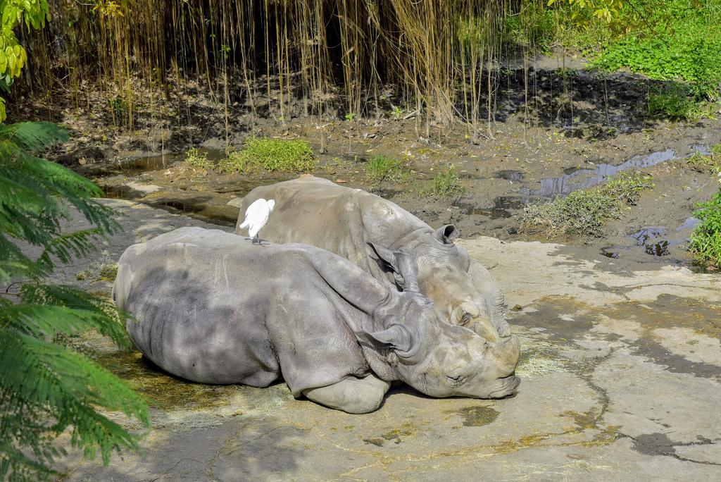 臺北市立動物園_DSC4453.jpg