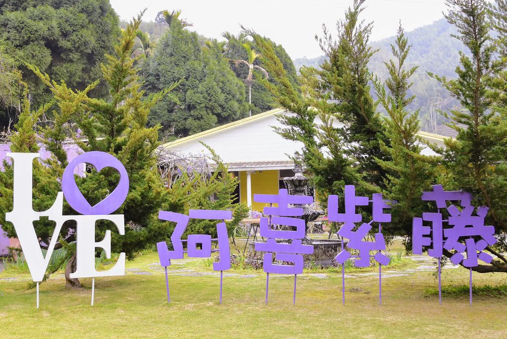 阿喜紫藤_DSC8807.jpg