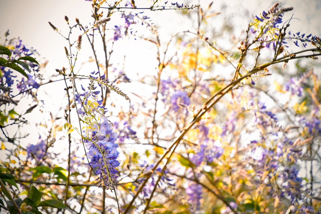 Emmie的南法玫瑰園_9204.jpg