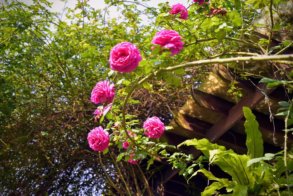 Emmie的南法玫瑰園_DSC9191.jpg