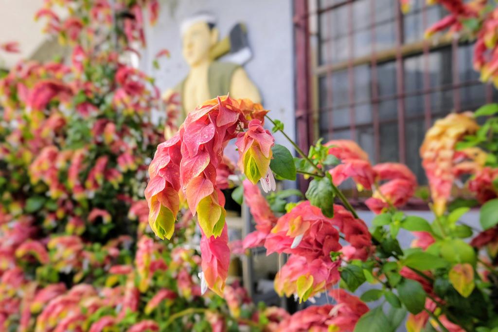 紅蝦花之家_1504.jpg