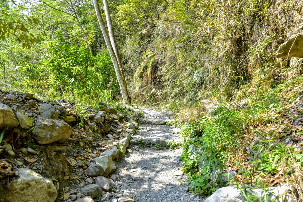 八仙山森林遊樂區_DSC0529.jpg