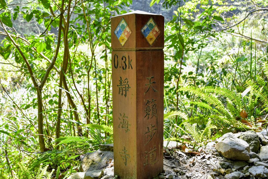 八仙山森林遊樂區_DSC0535.jpg