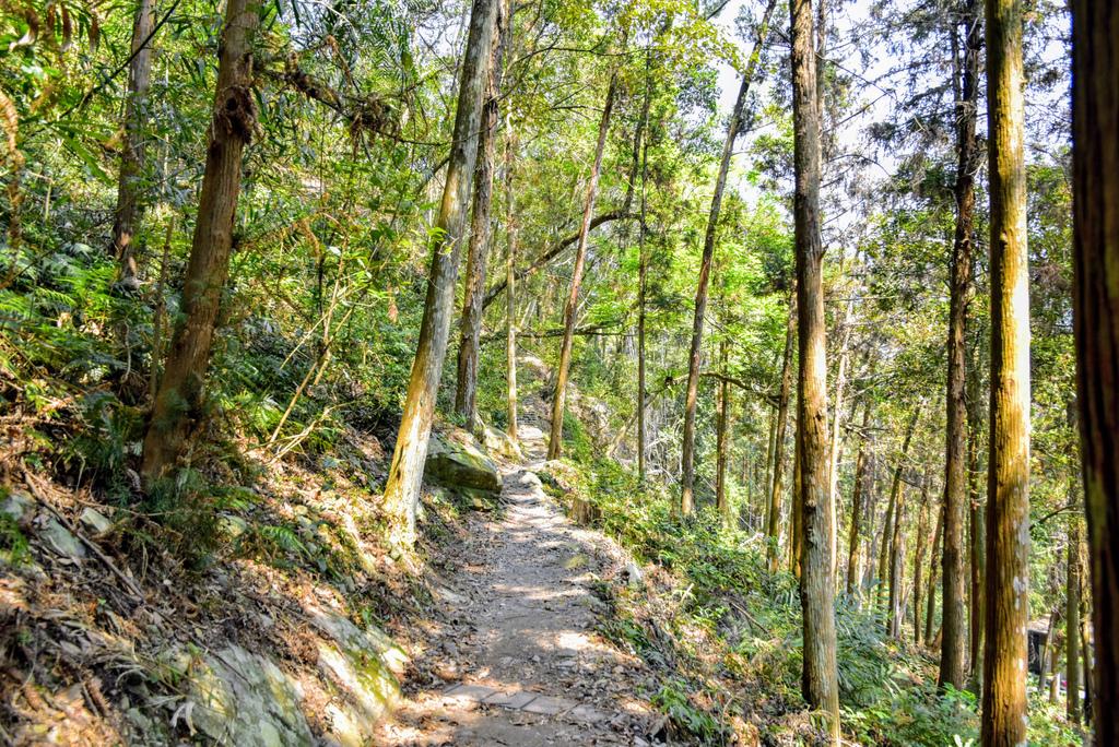 八仙山森林遊樂區_DSC0563.jpg