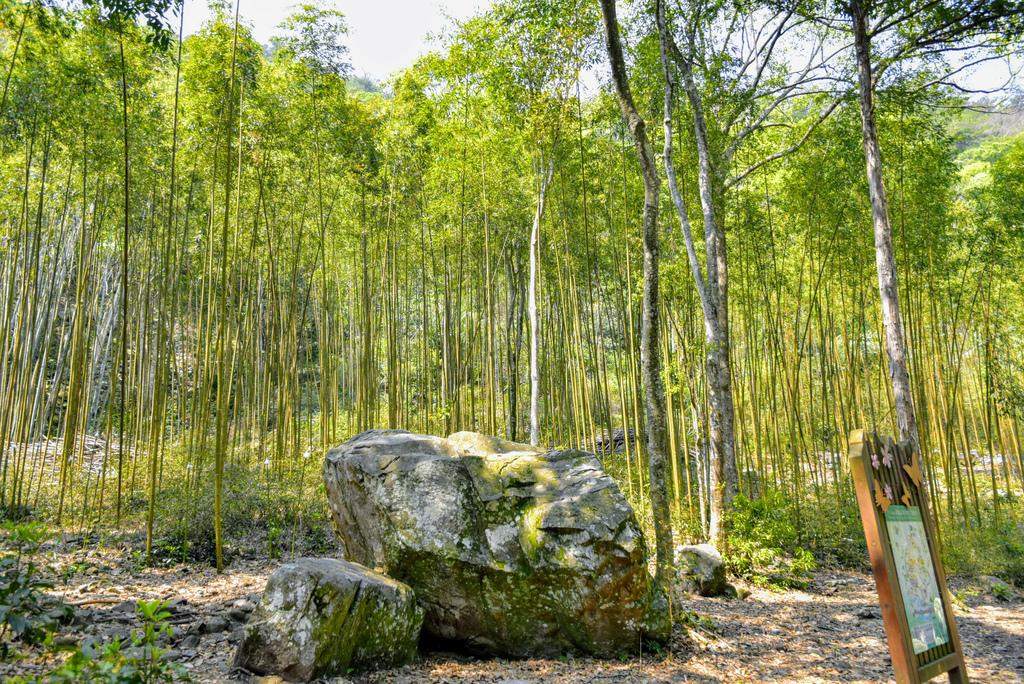 八仙山森林遊樂區_DSC0566.jpg