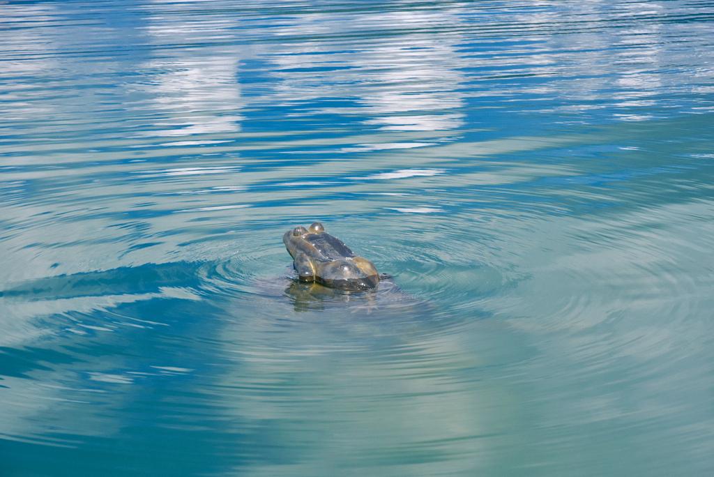 水蛙頭步道_DSC8849.jpg