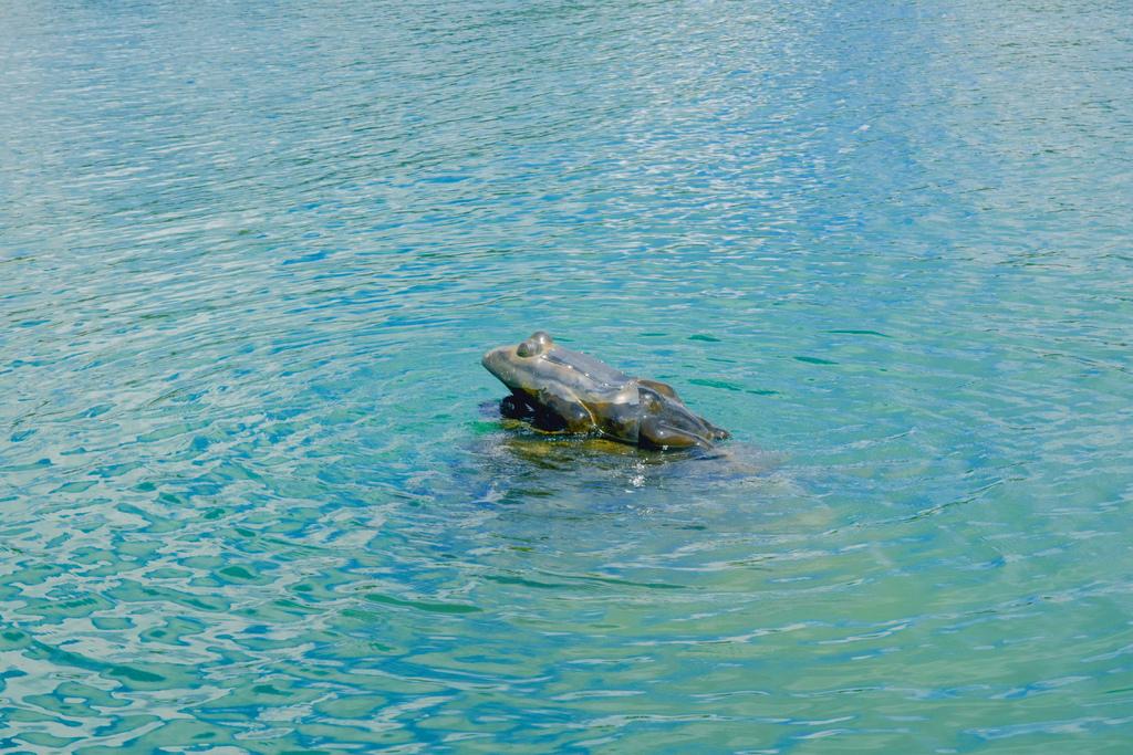 水蛙頭步道_DSC8909.0.jpg
