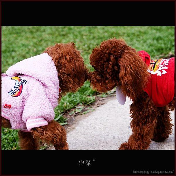 小淵和我的dog