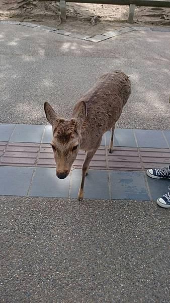 日本大阪Day4_170304_0041.jpg