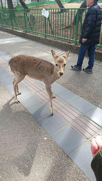 日本大阪Day4_170304_0079.jpg