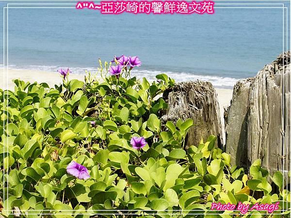 台灣好行|皇冠北海岸線|亞莎崎看見精緻旅遊P06