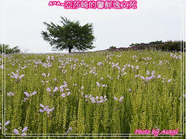 台灣好行|桃園慈湖線|亞莎崎的復古文化之旅P26