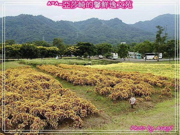 台灣好行|桃園慈湖線|亞莎崎的復古文化之旅P27