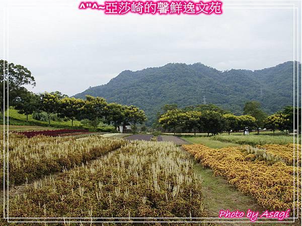 台灣好行|桃園慈湖線|亞莎崎的復古文化之旅P28