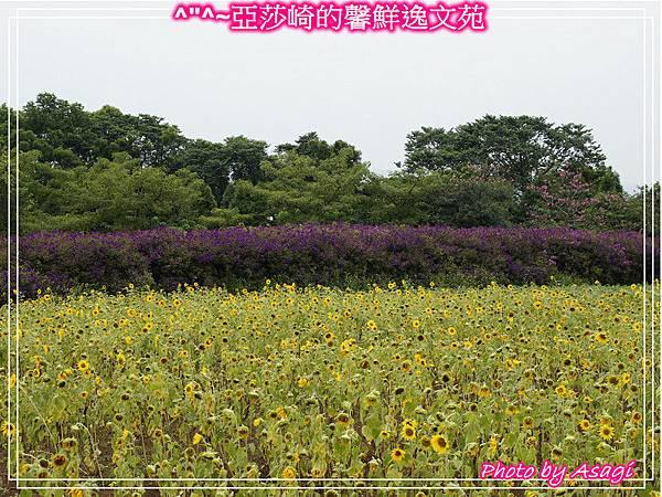 台灣好行|桃園慈湖線|亞莎崎的復古文化之旅P29