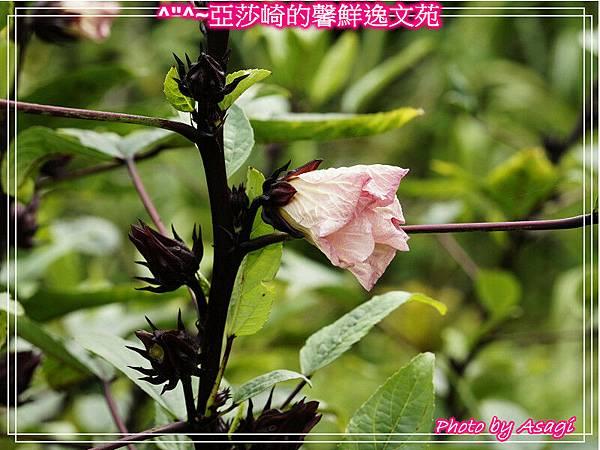 台灣好行|桃園慈湖線|亞莎崎的復古文化之旅P32