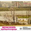 2013汝矣島櫻花祭|4/15亞莎崎參加一場櫻花未滿的櫻花祭
