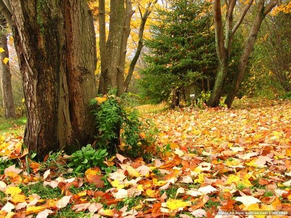 The Beautiful Scenery of Autumn 10