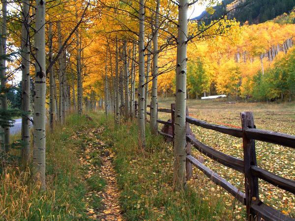 The Beautiful Scenery of Autumn 15